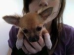 Applemilk on YesJapan - Taking care of dogs